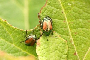 beetle control west palm beach fl