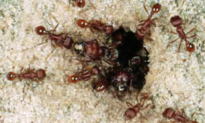 ant control west palm beach fl