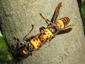 hornet control west palm beach fl