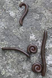 millipede control west palm beach fl