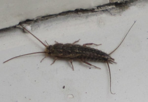 silverfish control west palm beach fl